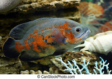 fish, più grande