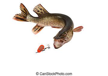 fish, pice