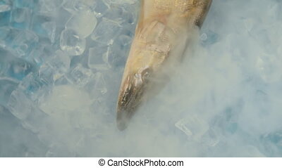Fish pike in the ice on the turntable. The table is...