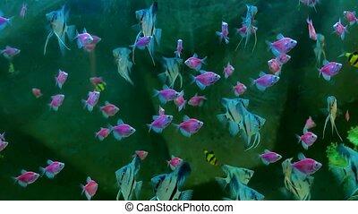 fish pink underwater in ocean. Fish swim in a video 4k sea...