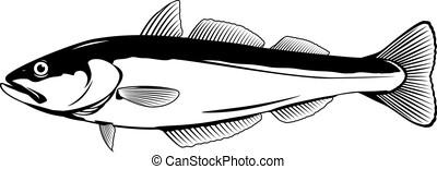 fish, pollock, イラスト