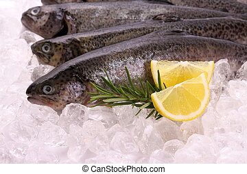 Fish rainbow trout with lemon on ice