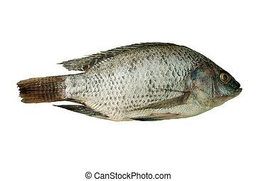 Fish - Raw fish. Whole tilapia on white background.