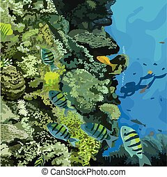 Fish, reef & a diver