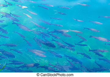 fish river abstract background