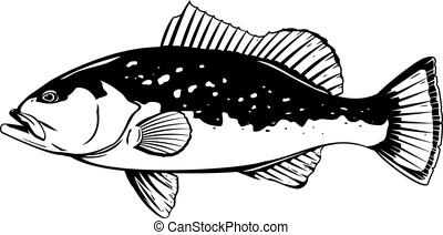 fish, rouges, illustration, mérou