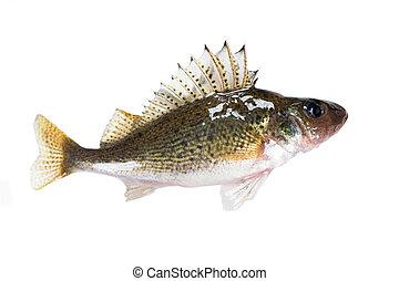 Fish ruff (Gymnocephalus cernuus) isolated on white...