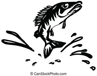 fish ruff - Ruff fish jumps out of water. Vector...