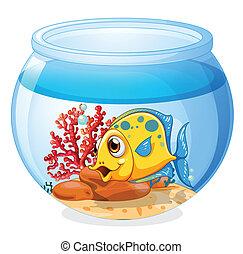fish, słój