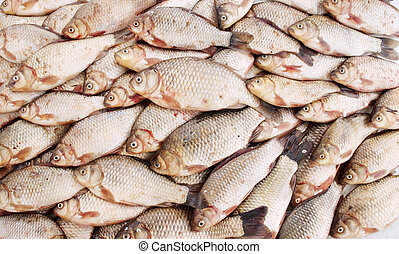 fish, słodkowodny, karp