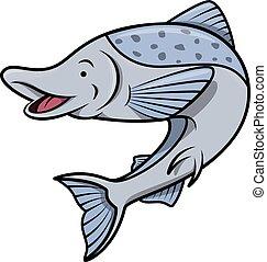 fish, saumon