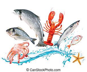 fish, saut, à, watersplash