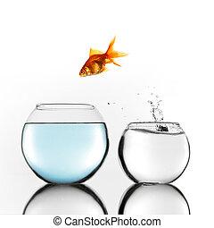 fish, sauter, bol, plus grand, or
