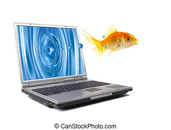 fish, sauts