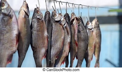 fish scales hangs on iron hook, the process of salting and...
