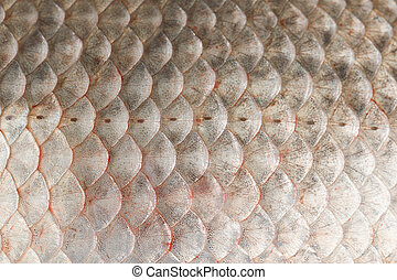 Fish scales skin texture macro view. Geometric pattern photo...