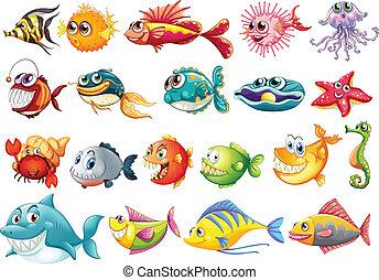 Fish set - Illustration of different kinds of fish