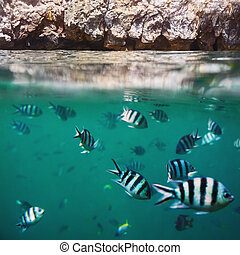 Fish shoal in the tropical ocean and rocks splitted by...