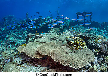 Fish shoals over coral reef