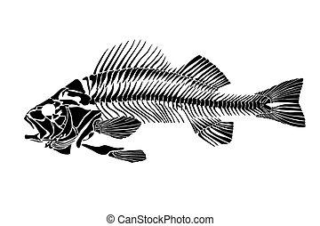 Fish skeleton isolated on white background