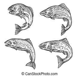 Fish sketch salmon and trout, fishing catch