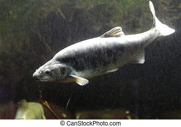 Fish Southwest
