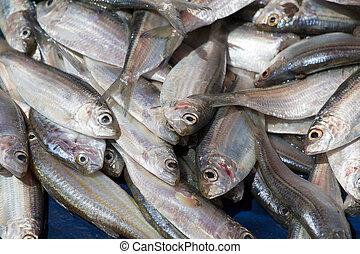 fish, sri lanka, piac