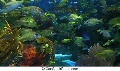 Fish swim in a coral reef