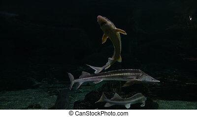 Fish swim in a large oceanarium