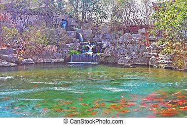 fish swimming 2