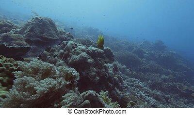 Fish swimming among seaweed and coral reef on sea bottom....