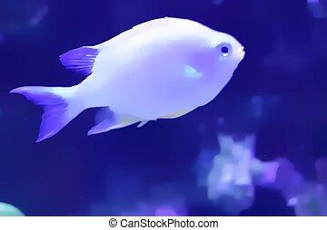 Fish Swimming In Aquarium Watercolor