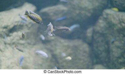 Fish swimming in decorative undersea world at oceanarium. Fish swimming in water in marine life park. Wild fish and underwater world for watching in aquarium