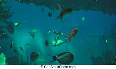 Fish Swimming In Fish Tank