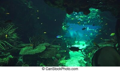 Fish Swimming In Undersea Cavern Aquarium
