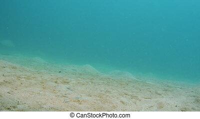 Fish swimming on the ocean floor