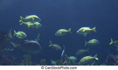 Fish Swimming Under Water
