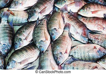 fish, tło, tilapia