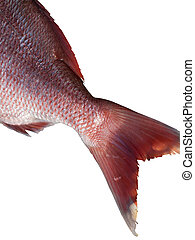 Fish tail isolated on white background