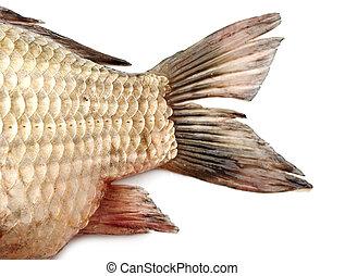 Fish tail,carp