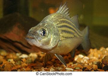 Fish Tank - Close up of fish in tank.