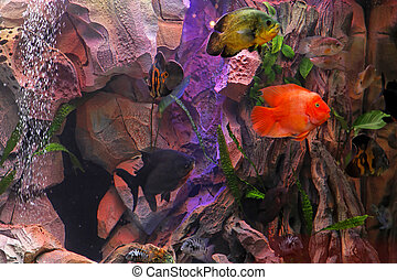 Fish tank - Tropical reef inside large aquarium with...