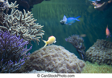 Fish Tank with Coral.