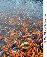 fish, troupeau, fond