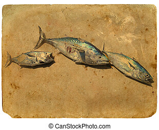 Fish Tuna on the sand. Old postcard.