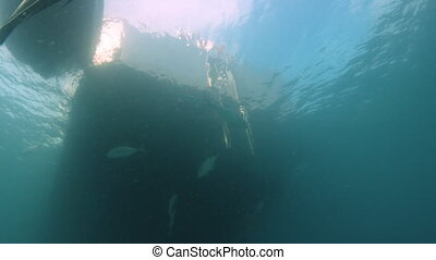 Fish under a sailing boat - A shot from underwater of a boat...