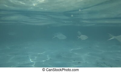 Fish under water in the blue background of sea water
