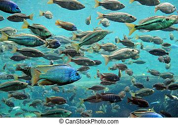 Fish Underwater - Bass and tilapia underwater