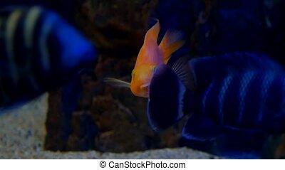 fish underwater in ocean. Fish swim in a video sea of...