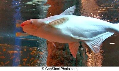 fish underwater in ocean. Fish swim in a sea video 4k of...